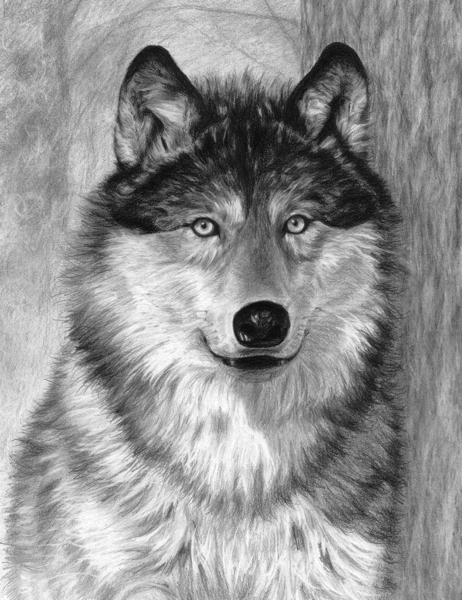 Malovani Podle Cisel Tuzkou Sketching Art 22x28 Cm Vlk Hrst Cz